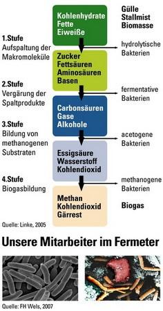 die-vier-stufen-der-biogasbildung-arge-kompost-und-biogas-oesterreich-2007
